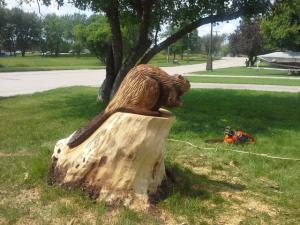 stump beaver